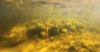 Kivirakenne Kouvolan Vuohijärvessä. Kuvaaja: Eeva Vakkari