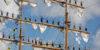 Fartyget Cuauhtémocs besättning i riggen under evenemanget The Tall Ships' Races i Kotka i juli 2007 (beskuren bild), Erik Tirkkonen / Finlands sjöhistoriska museums bildsamling / Museiverket. Objektinumero: SMK200708:86